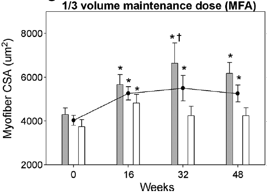 The 1/3 volume group for younger adults actually increased vastus lateralis cross-sectional area following the 16-week intensive period until the end of the 48 weeks.