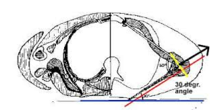 Figure 1a The Scapular Plane of the Shoulder