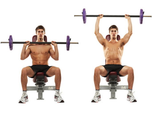 Figure 3. The Seated Overhead Press with a Bench Backing