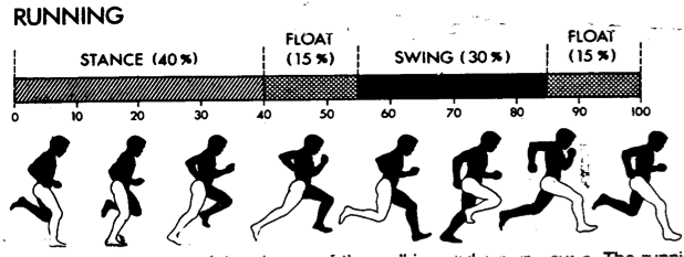 Figure 1. The running gait cycle