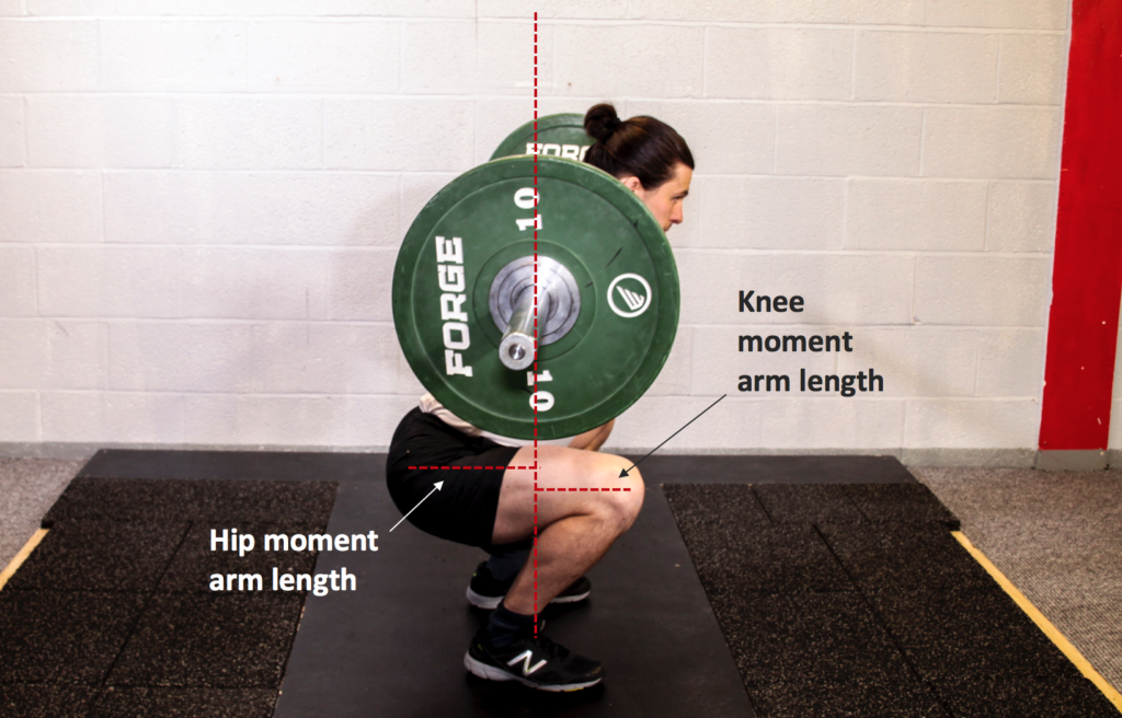 Calculating Joint Moments in the Squat