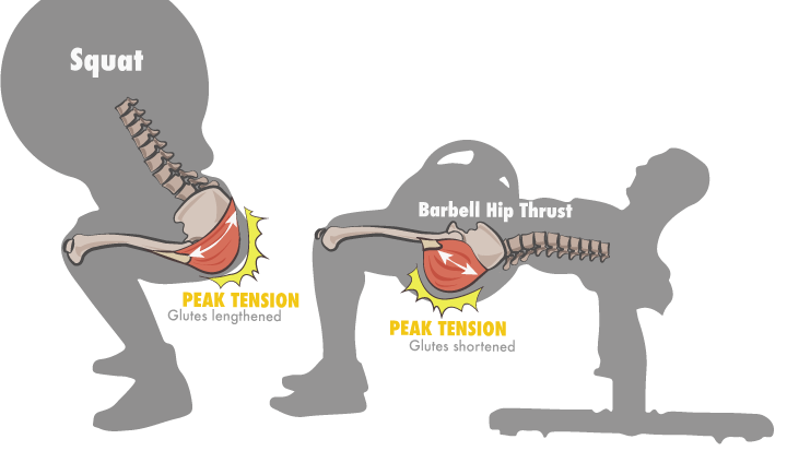Your Optimal Training Frequency for the Glutes Part I: Exercise Type