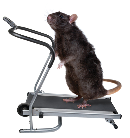 rat treadmill